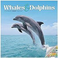 クジラとイルカ カカレンダー 2020セット - デラックス 2020 クジラとイルカ 壁カレンダー 100枚以上のカレンダーステッカー (イルカとクジラのギフト オフィス用品)