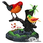 虹色の小鳥がかわいい声で歌い、その声に思わず聞きほれてしまいます!