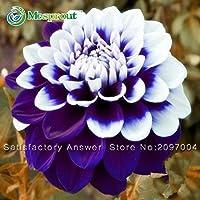 ベストセラー!ダリアの花の種、美しい花と育つのが簡単、Diyの家庭菜園、30種子/パック