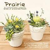 プリザーブドフラワー観葉植物キット 2個組 プレリ  プレゼントにも。