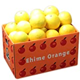 お試し品愛媛ニューサマーオレンジ(小夏)6kg(3kg×2箱) フルーツ 果物 通販
