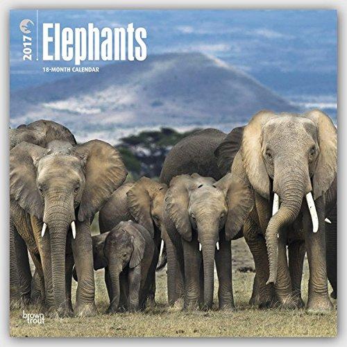 Elephants 2017 Calendar (Square Wall)