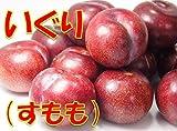 鹿児島県産奄美産 いぐり(すもも) 3kg ※加工用 奄美プラム