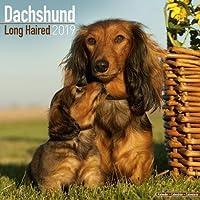 Dachshund Long Haired Calendar 2019 (Square)