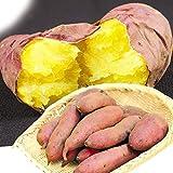 国華園 千葉産 ご家庭用 紅はるか 5kg1組 さつま芋 さつまいも