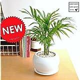 LAND PLANTS テーブルヤシ 白色丸型陶器 table green series