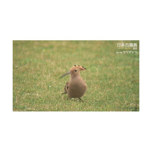 シンフォレストBlu-ray 日本百鳴鳥 2...の紹介画像28