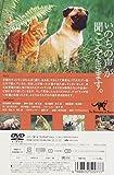子猫物語 [DVD] 画像