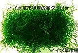 イイ水草市場 水草 ウィローモス フードパック一杯 横幅10cm×奥行8cm×深さ2cm 無農薬
