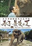 天王寺おばあちゃんゾウ 春子 最後の夏 [DVD] 画像
