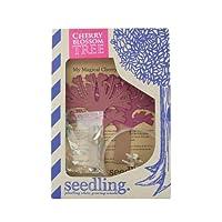 Seedling My Magical Cherry Blossom Tree [並行輸入品]