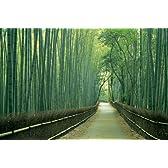 1500スモールピース 嵯峨野の竹林(京都府京都市) (50x75cm)