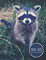 Two Year Planner 2020-2021: Curious Raccoon Planner January 1, 2020 to December 31, 2021 Weekly & Monthly Planner + Calendar Views Animal 2 Year Calendar 24 Month Agenda Planner Gift For Trash Panda Lovers