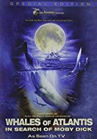 Whales of Atlantis: In Search of Moby Dick [DVD] [Import]