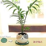 テーブルヤシ (チャメドレア) アニマル観葉植物みけねこ陶器鉢 鉢皿付(葉っぱプレート+プラ鉢皿) 高さ23~30cm