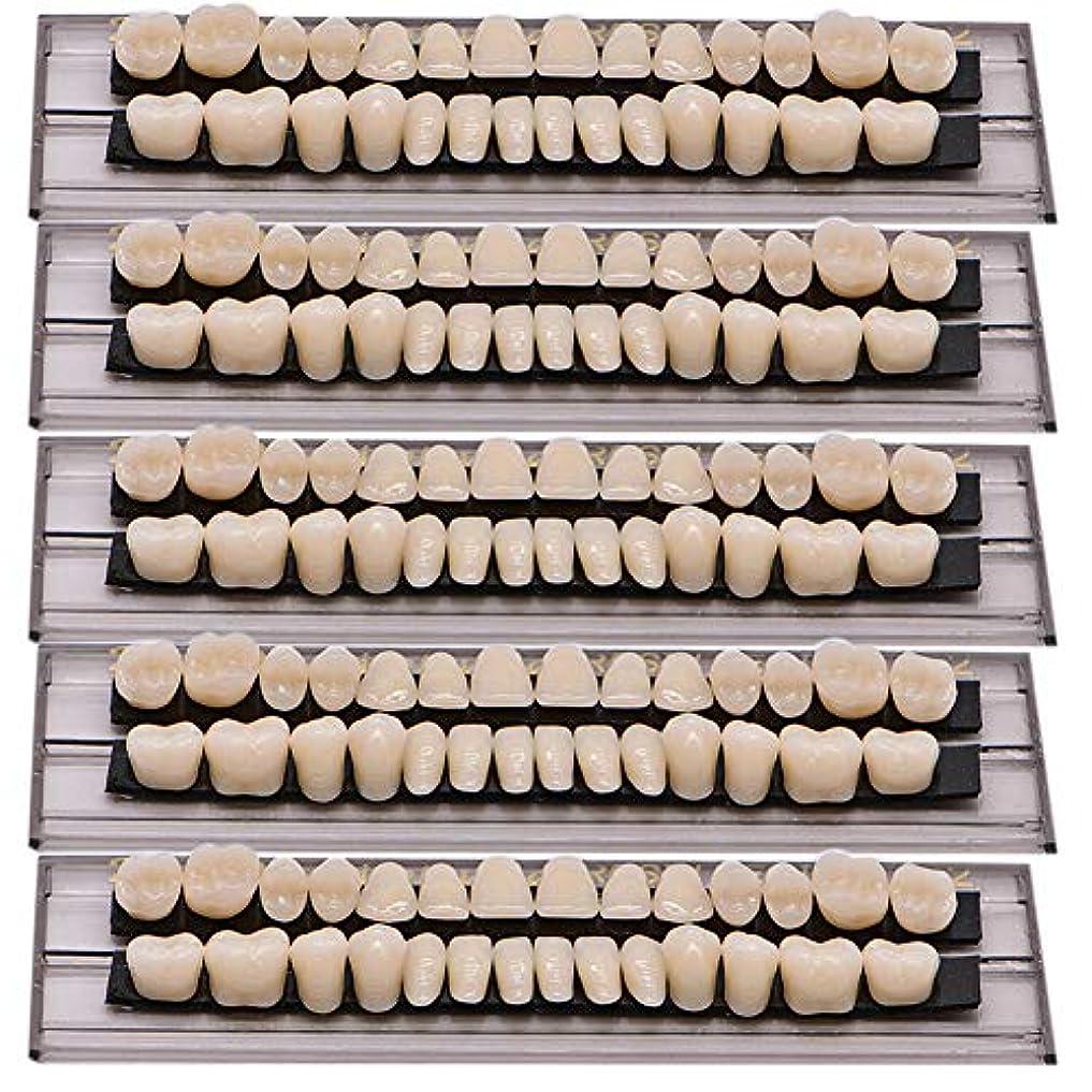 ズーム逸脱モジュールOral Dentistry 入れ歯ケア 口腔歯科 歯科用アクリル 樹脂 義歯キット ハロウィンホラーの小道具 ホワイト義歯23 A2 アップ&ダウン歯科28個/セット(A2/5セット)