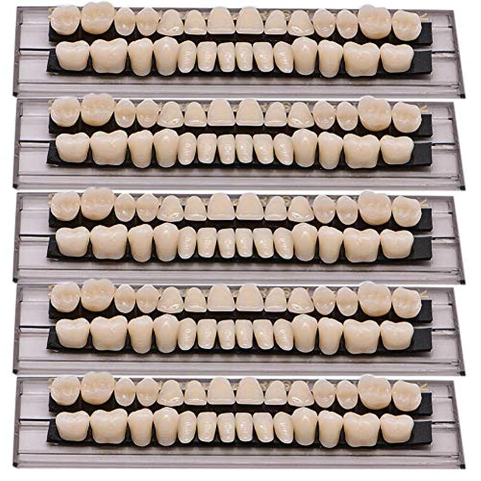 Oral Dentistry 入れ歯ケア 口腔歯科 歯科用アクリル 樹脂 義歯キット ハロウィンホラーの小道具 ホワイト義歯23 A2 アップ&ダウン歯科28個/セット(A2/5セット)