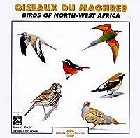Oiseaux Du Maghreb