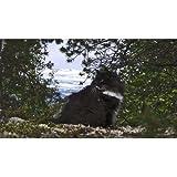 岩合光昭の世界ネコ歩き ノルウェー DVD【NHKスクエア限定商品】 画像