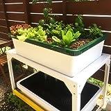 さかなで野菜を育てる 話題の さかな畑 / 屋外用 中型 アクアポニックス キット