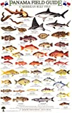 Panama Caribbean Reef Fish Identification Guide (Laminated Single Sheet Field Guide) (English and Spanish Edition)
