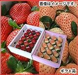 南国フルーツ 福岡産 紅白いちご あまおう&淡雪 ギフト箱送料無料¥4,980