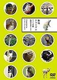 動物チラリズム -カメラ目線動物写真DVD-