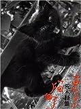 東京猫町 画像