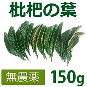 無農薬 枇杷の葉(びわの葉) 150g(枇杷の生葉15枚前後) 【長崎・大分県産】