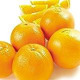 国華園 和歌山産 ネーブルオレンジ 5kg1