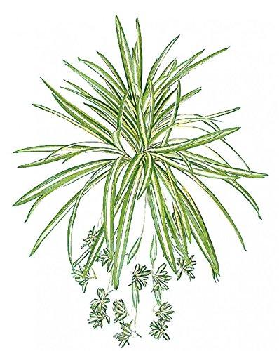 タカショー グリーンデコ 屋内用 和風オリヅルラン(人工植物/観葉植物) W35cm (GN-33)