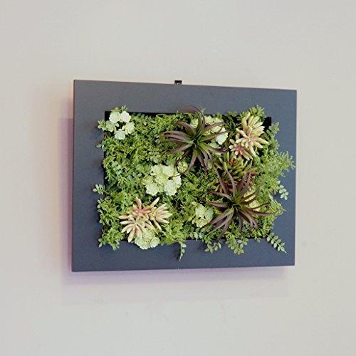 壁面グリーンフレーム多肉植物