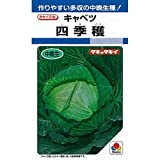 キャベツ 種 【 四季穫 】 種子 小袋(約2ml)