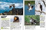 デジタルカメラ野鳥撮影術 完全新版 プロに学ぶ作例・機材・テクニック (アスキームック) 画像