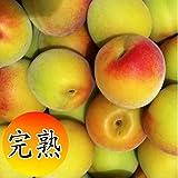 産地直送 和歌山県産南高梅(完熟梅)約5kg 大粒の3Lサイズ以上または2Lサイズ
