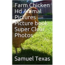 Farm Chicken Hd Animal Pictures Picture book Super Clear Photos