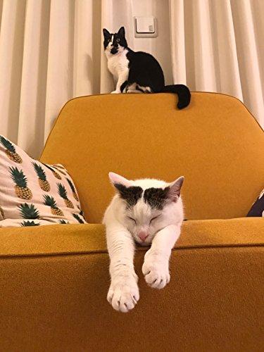 うちの猫がまた変なことしてる。3 (メディアファクトリーのコミックエッセイ)
