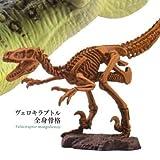 カプセルQミュージアム 恐竜発掘紀 白亜紀 最強恐竜の時代 [4.ヴェロキラプトル(全身骨格)](単品)