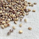 国産(徳島県) もち麦(ダイシモチ) 5kg