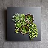 A plus floral art インテリア グリーン ボタニカル フレーム ルメン 黒 フェイクグリーン 多肉植物 観葉植物 造花 壁掛け ギフト
