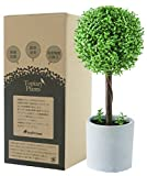 フェイクグリーン 光触媒 トピアリー ボール お世話のいらない 癒しの グリーン 観葉植物 インテリア 人工観葉植物 白陶器