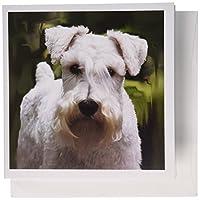 Dogs Schnauzer–ホワイトSchnauzer–グリーティングカード Set of 12 Greeting Cards