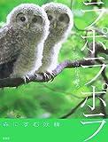 ラポラポラ―森にすむ妖精 (そうえんしゃ・写真のえほん) 画像