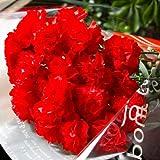 パラボッセ 花束 カーネーション 20本 bouquet red carnation