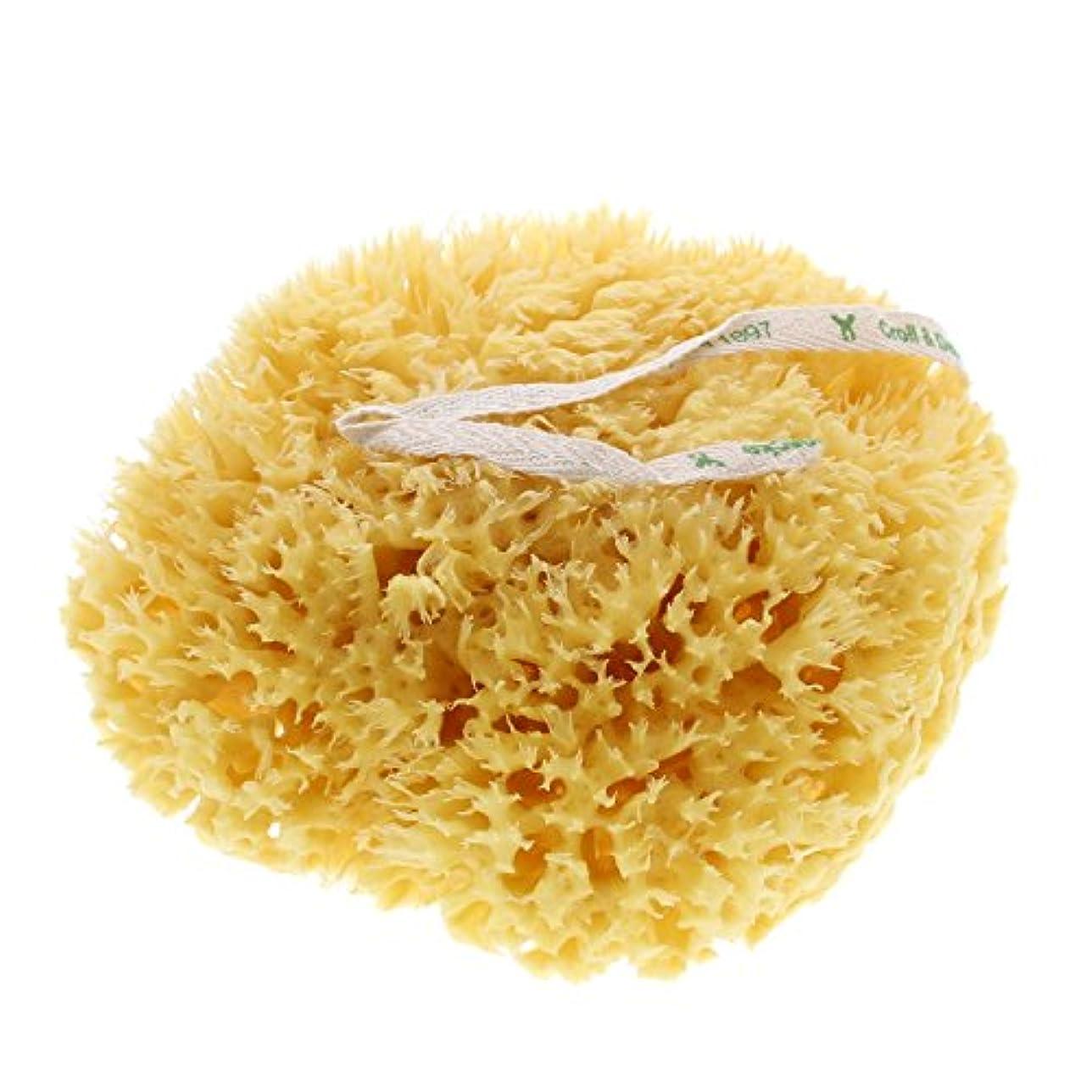 クロール&デネッケ 海綿 体