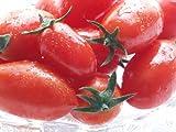 フルーツミニトマト アイコ 1kg (北海道産) 平均糖度8度以上