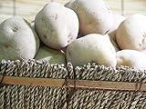 北あかり 10kg (サイズ無選別 B品) 北海道留寿都 ニセコ産他ジャガイモ きたあかり 北海道産じゃがいも