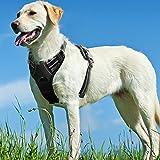 ハーネス 犬 大型犬 24-56KG 用 歩行補助 犬用 はーねす 引っ張り防止 首輪 犬はーねす 犬の胴輪 げーじ ソフト メッシュ やわらか かわいい ひっぱり防止 咳き込み防止 子犬 装着簡単 胴輪(黒)
