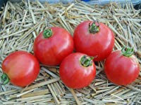 【SEED】Heirloom Tomato® Ozark Pink エアルーム・トマト・オザーク・ピンク(15 seeds)P