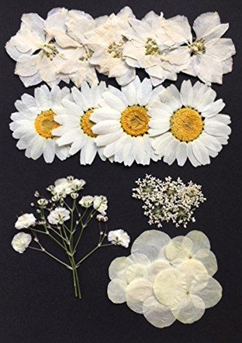 【お花屋さんの押し花セット ホワイトMix】